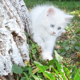 White kitten in the park in tree. Stock Photos