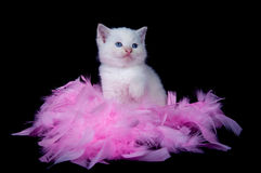 White kitten and pink feathers Royalty Free Stock Photography