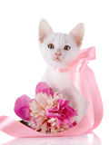 White kitten with a pink tape and a flower of a peony. Royalty Free Stock Photography