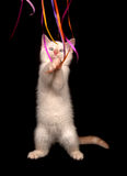 White kitten playing with streamers royalty free stock image