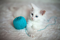 White kitten playing with a tangle of blue threads Stock Photos