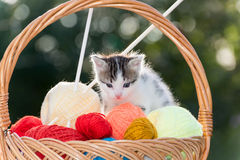 White kitten plays  balls of yarn Stock Photography