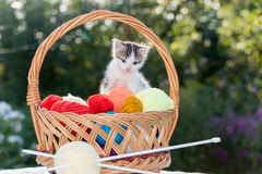 White kitten plays  balls of yarn Royalty Free Stock Image