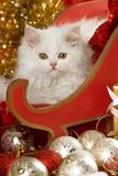 White kitten in a santa sledge with decoration Stock Images