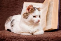 A white kitten sits at an open book_ stock images