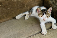 White kitten sitting on the porch Stock Images
