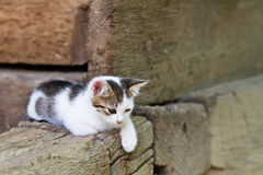 White kitten sitting on the porch stock image