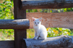 White kitten sitting on a wooden fence Royalty Free Stock Photos