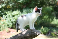 White kitten standing on the tree branch Stock Photos