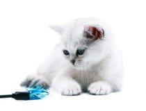 White kitten with a toy. Stock Photos