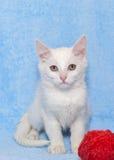 White kitten with a toy Stock Photo