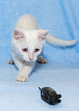 White kitten with a toy Royalty Free Stock Image