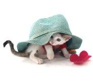 White kitten watching under  a blue hat Stock Image