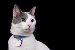 White kitty on black Stock Photos