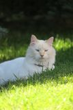 White kitty  Stock Photography