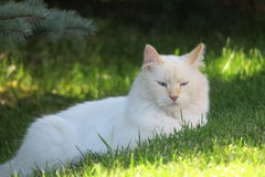 White kitty  Royalty Free Stock Images