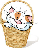 White Kitty In Basket - Vector Illustration Stock Photos