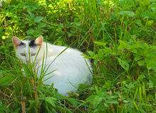White kitty sitting and hiding. In the grass Royalty Free Stock Photography