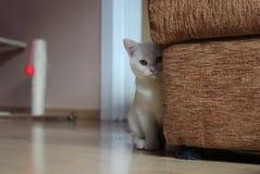 White kitty Stock Photos