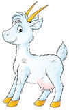 white kozie ilustracja wektor