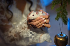White lab rat in his hand-2 Stock Photos