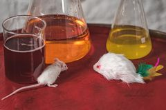 White laboratory mouse on the background of flasks with reagents. Against animal testing. White laboratory mouse on the background of the flask with colored