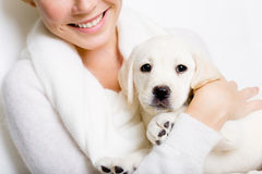 White labrador puppy on the hands of woman Royalty Free Stock Image