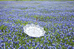 White lace parasol upside down in a field of Texas bluebonnets Stock Image
