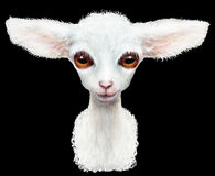 white lamb royalty free stock photo