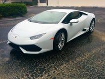 White Lambo Stock Image