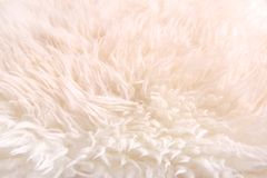 White lambskin as background Stock Image