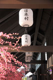 White lamp and cherry blossoms or sakura. Royalty Free Stock Photo