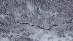 White lands with woods in snow. View from drone of tranquil evergreen woods in white snow with narrow river flowing among trees, Poland stock video footage