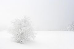 White landscape Royalty Free Stock Photography