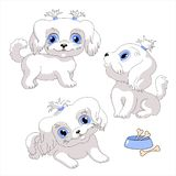 White lap dog. Little dog with blue eyes vector illustration royalty free illustration