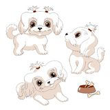 White lap dog. Little dog vector illustration. Cute puppy brown eyes royalty free illustration