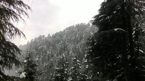 White layer of himachal Forests Royalty Free Stock Photography