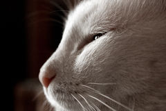 White lazy cat Stock Photo
