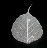 White leaf. On a black background Stock Photos