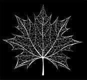 White leaf Stock Photos