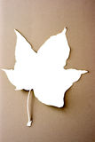 White leaf contour. On a cream background Stock Image