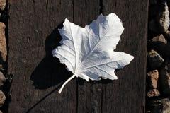 White Leaf Royalty Free Stock Photos