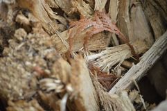 White leaves and sticks. Close up details of logs, sticks, and leaves on the ground Royalty Free Stock Image