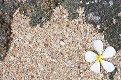 White Leelawadee on sand Royalty Free Stock Photography