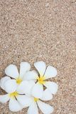 White Leelawadee on sand Royalty Free Stock Photo