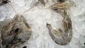 White leg shrimp in crunch ice in seafood market. Vannamei, also known as white leg shrimp in seafood market Stock Images