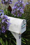 White letter box purple flowers Stock Photography