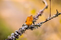 White lichen and red leave on tree. Branch royalty free stock image