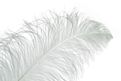 White Light feather Stock Photo