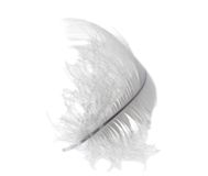 White light swan feather Royalty Free Stock Photography